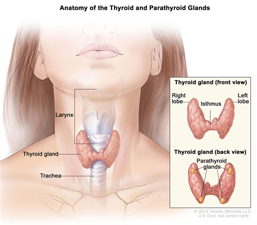 Endocrine Surgery - Thyroidectomy