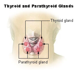 adrenal gland removal cause weight loss