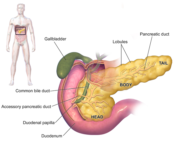 endocrine surgery distal pancreatectomy